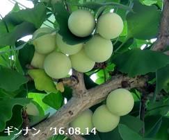 f:id:mikawakinta63:20160815133858j:image:left