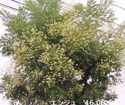 f:id:mikawakinta63:20160816104130j:image:right