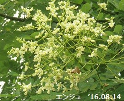 f:id:mikawakinta63:20160816111926j:image:left