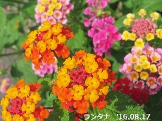 f:id:mikawakinta63:20160817112819j:image:left