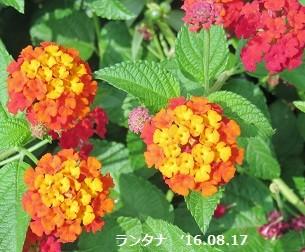f:id:mikawakinta63:20160817142338j:image:left