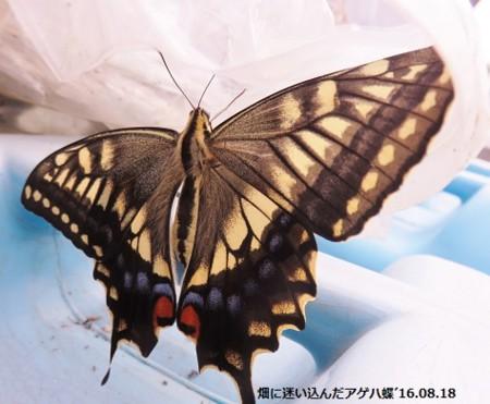 f:id:mikawakinta63:20160818140001j:image