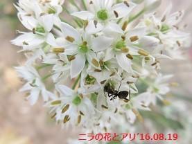 f:id:mikawakinta63:20160819141140j:image:left