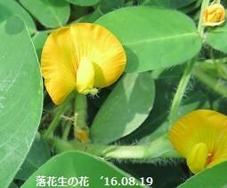 f:id:mikawakinta63:20160819153019j:image:left