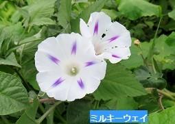 f:id:mikawakinta63:20160821163909j:image:right