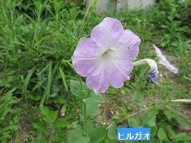 f:id:mikawakinta63:20160821170349j:image:right