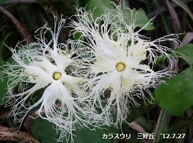 f:id:mikawakinta63:20160822172416j:image:right