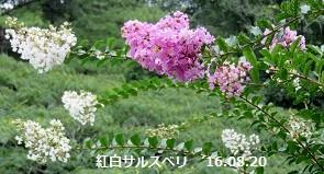 f:id:mikawakinta63:20160822212714j:image:left