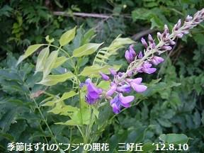 f:id:mikawakinta63:20160822213432j:image:left