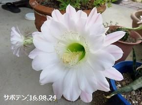 f:id:mikawakinta63:20160824110705j:image:left