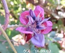 f:id:mikawakinta63:20160902195207j:image:left