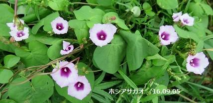 f:id:mikawakinta63:20160905140020j:image