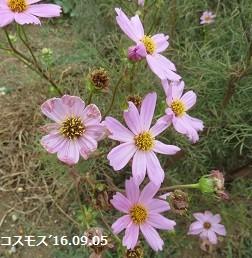 f:id:mikawakinta63:20160905151302j:image:left