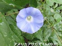 f:id:mikawakinta63:20160907135143j:image:left