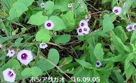f:id:mikawakinta63:20160912100555j:image:right