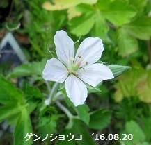 f:id:mikawakinta63:20160920181119j:image:right