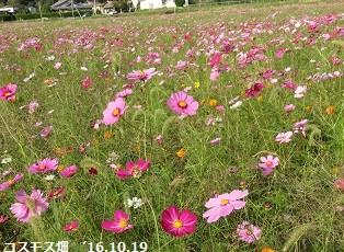 f:id:mikawakinta63:20161023140343j:image:right