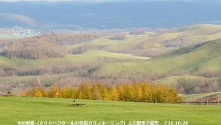 f:id:mikawakinta63:20161102204926j:image