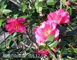 f:id:mikawakinta63:20161202140454j:image:left
