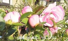 f:id:mikawakinta63:20161202150758j:image:right