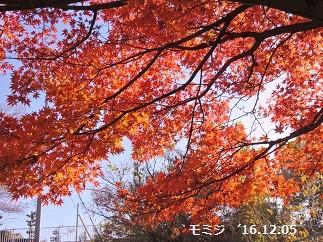 f:id:mikawakinta63:20161205202302j:image:left
