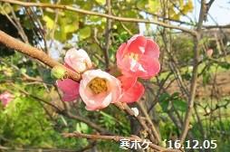 f:id:mikawakinta63:20161208151346j:image:right