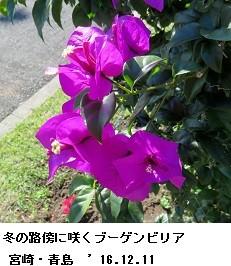 f:id:mikawakinta63:20161219123722j:image:right