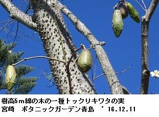 f:id:mikawakinta63:20161219145024j:image:left