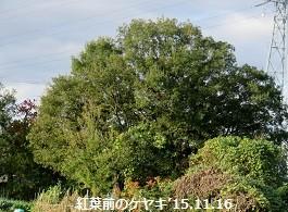 f:id:mikawakinta63:20161221170810j:image:right