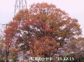 f:id:mikawakinta63:20161221170959j:image:left