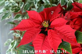 f:id:mikawakinta63:20161222132855p:image:right