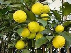 f:id:mikawakinta63:20161223093101j:image:right