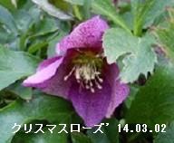 f:id:mikawakinta63:20161225164105j:image:right