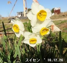 f:id:mikawakinta63:20161227140232j:image:left