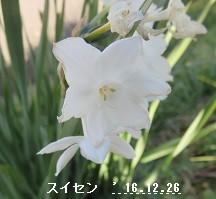 f:id:mikawakinta63:20161229155256j:image:left