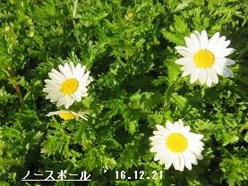 f:id:mikawakinta63:20161229155611j:image:right