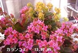 f:id:mikawakinta63:20161230195624j:image:right
