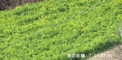 f:id:mikawakinta63:20170202142729j:image