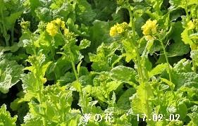 f:id:mikawakinta63:20170202144650j:image:left