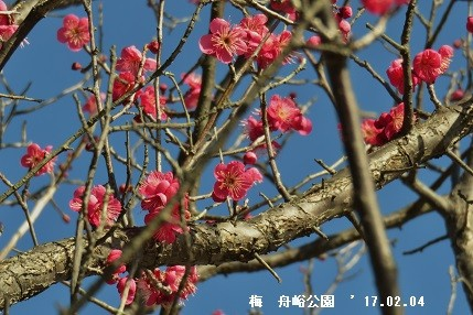 f:id:mikawakinta63:20170205152605j:image