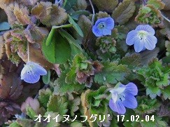 f:id:mikawakinta63:20170205161344j:image:right