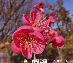 f:id:mikawakinta63:20170206155411j:image:left
