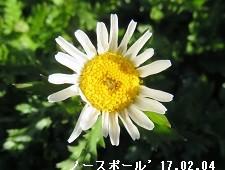 f:id:mikawakinta63:20170208202537j:image:left