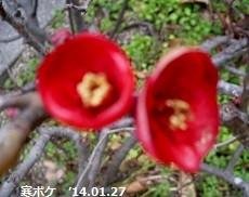 f:id:mikawakinta63:20170209162214j:image:left