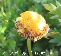 f:id:mikawakinta63:20170209195852j:image:right