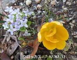 f:id:mikawakinta63:20170212213328j:image:right
