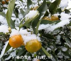 f:id:mikawakinta63:20170216172126j:image:right
