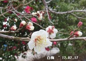 f:id:mikawakinta63:20170217154423j:image:left