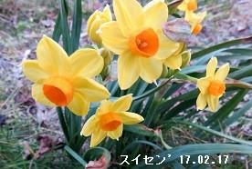 f:id:mikawakinta63:20170217154604j:image:left