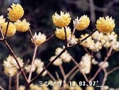 f:id:mikawakinta63:20170221181146j:image:left